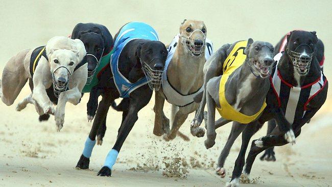 Greyhound Racing - online sports betting NZ