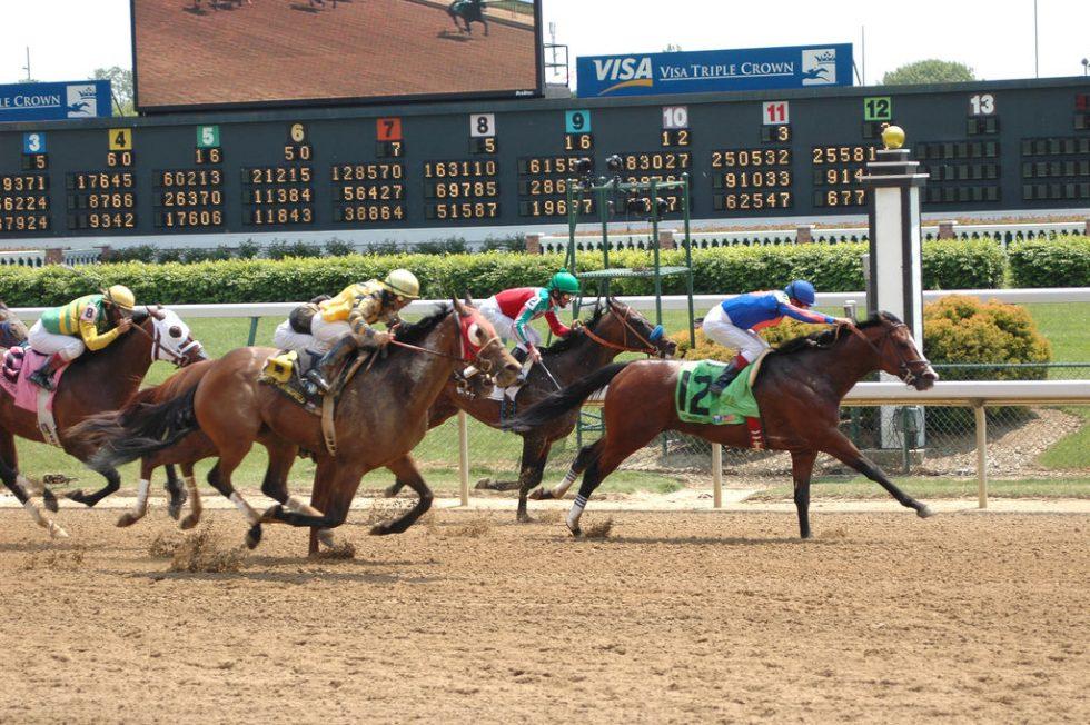 horse betting slang terms