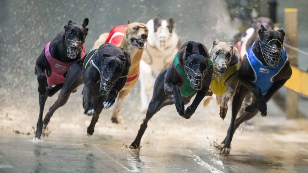 A Brief History of Greyhound Racing