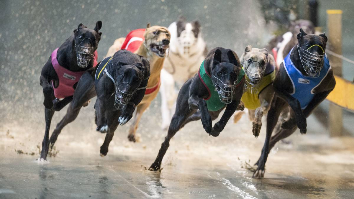 Dog racing betting odds explained football dead heat rules betting