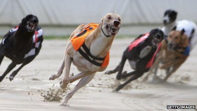 Greyhound Racing History