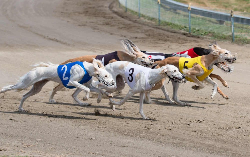 Towcester greyhound betting explained chipping norton stakes betting websites